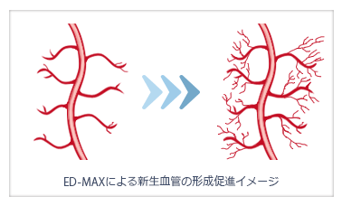 ED-MAXによる新生血管の形成促進イメージ