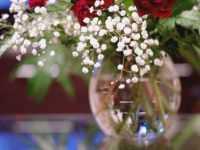 バイアグラの植物への効能のアイキャッチ画像