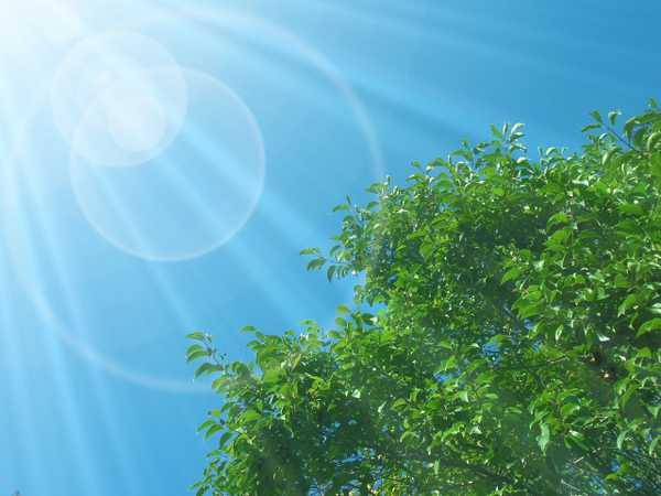 光を浴びる木
